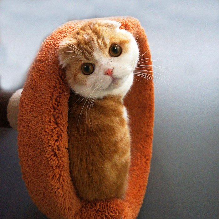 Cute And Funny Animals Pictures To Make Your Day (75 Photos)