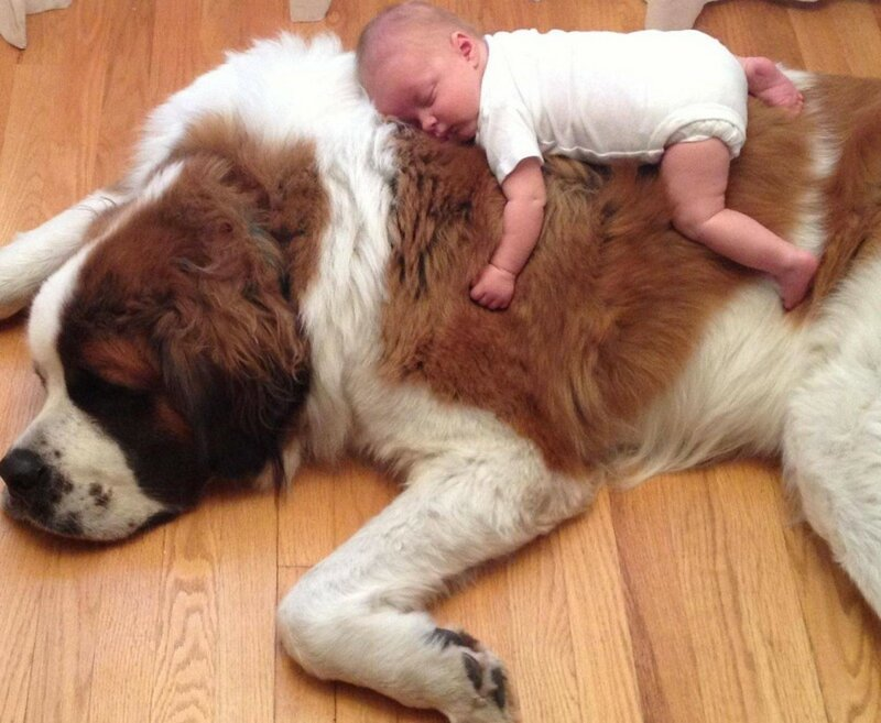 Interesting And Kind Pictures For Mood (20 Photos)