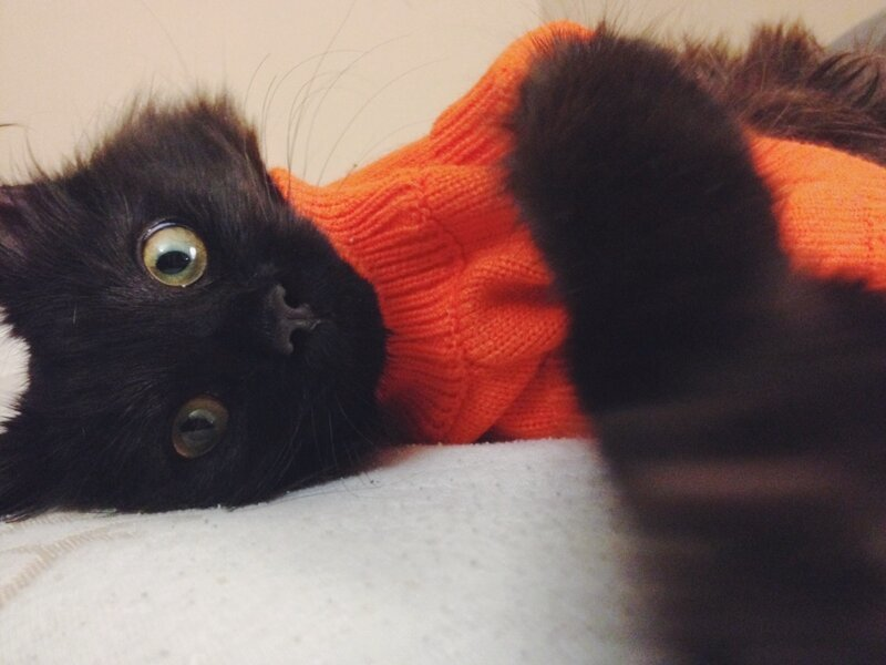 These Funny And Cute Animals (55 Photos)