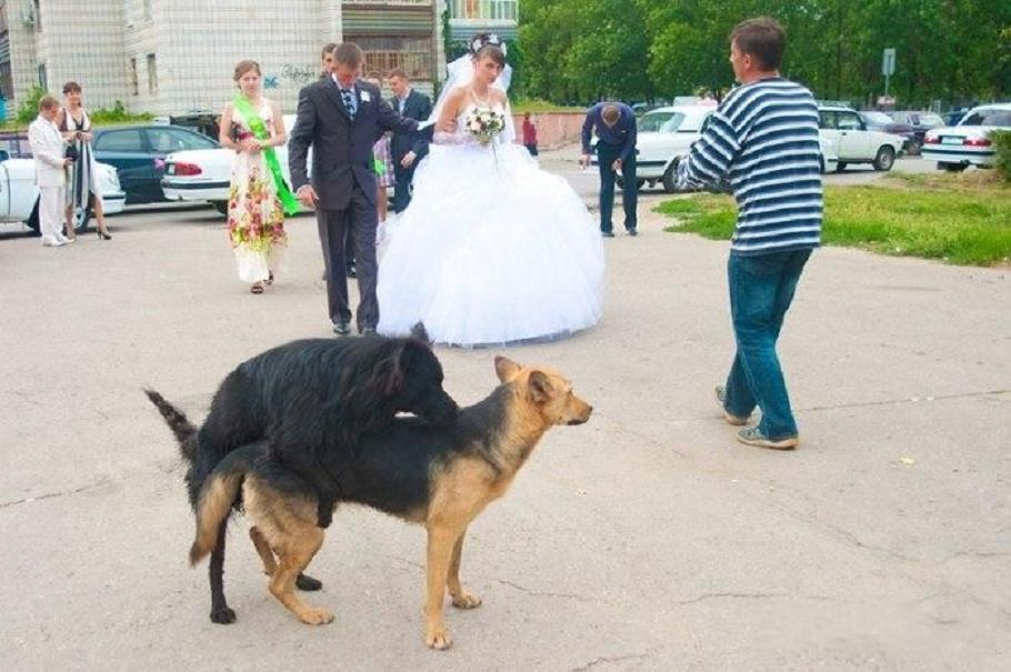 Tragically Awkward Wedding Photos (26 Photos)