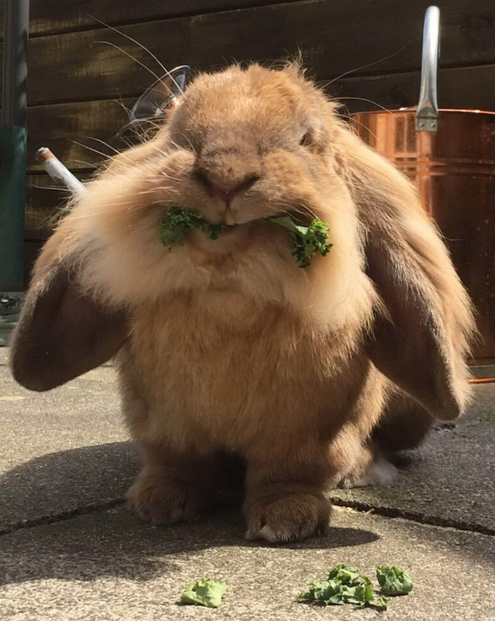 Funny Cute Animals To Make Your Day (37 Photos)