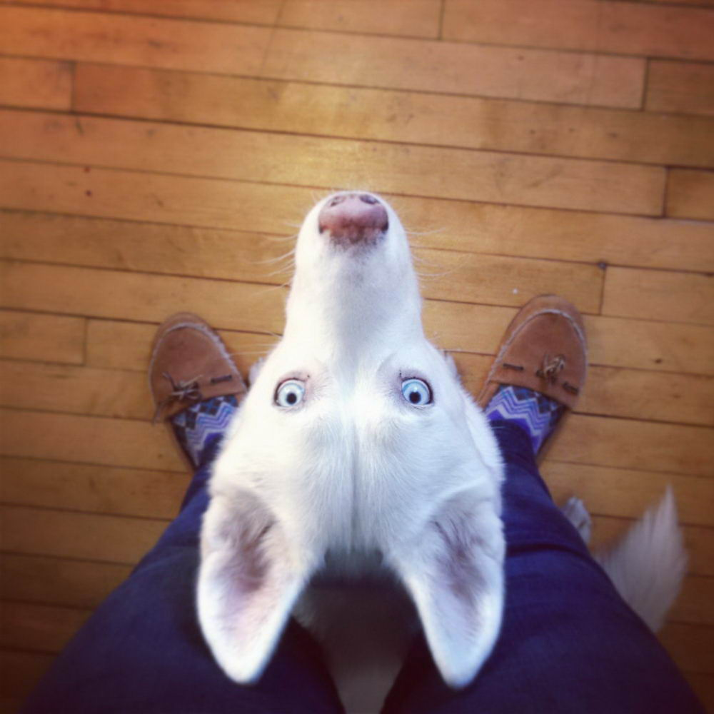 Cute And Funny Animals Pictures To Make Your Day (35 Photos)