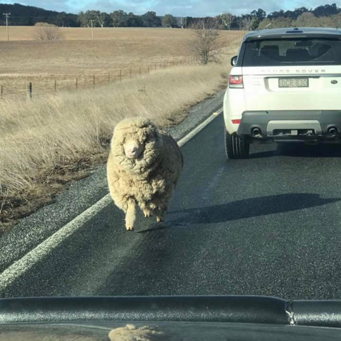 Funny And Awesome Pictures From Australia (40 Photos)