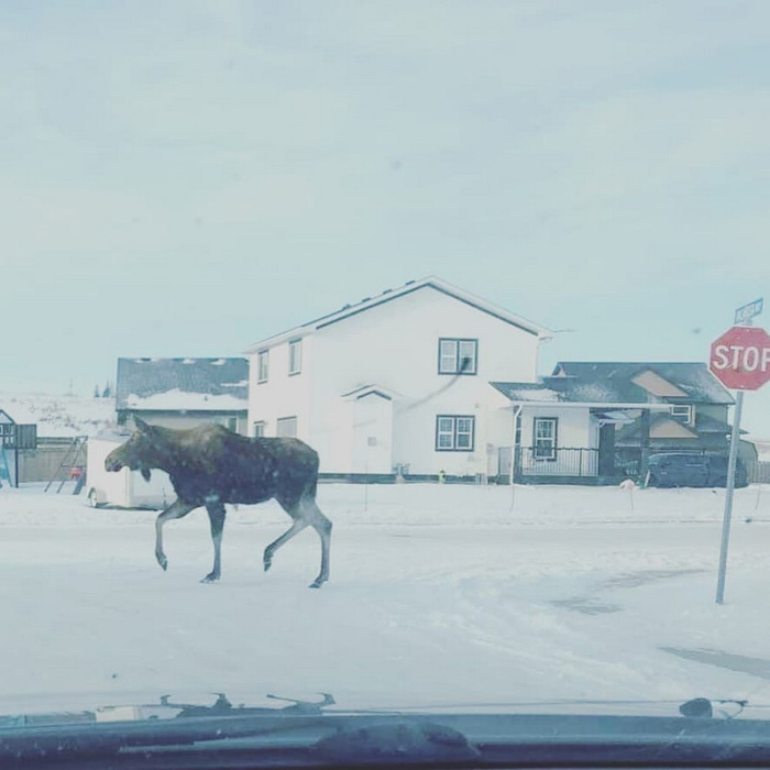 Funny And Awesome Pictures From Canada (40 Photos)