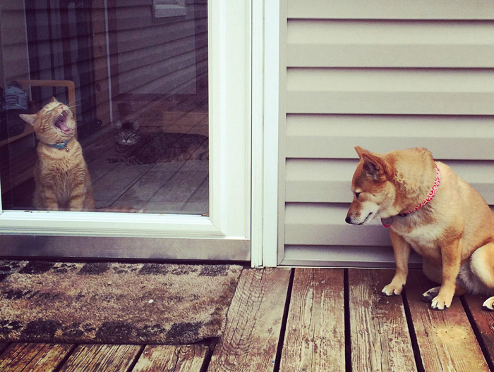 Funny Cute Animals To Make Your Day (36 Photos)