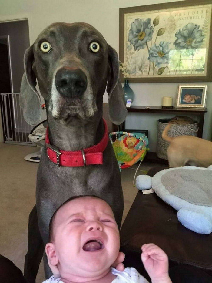 Funny Pictures Random Daily Picdump (135 Photos)