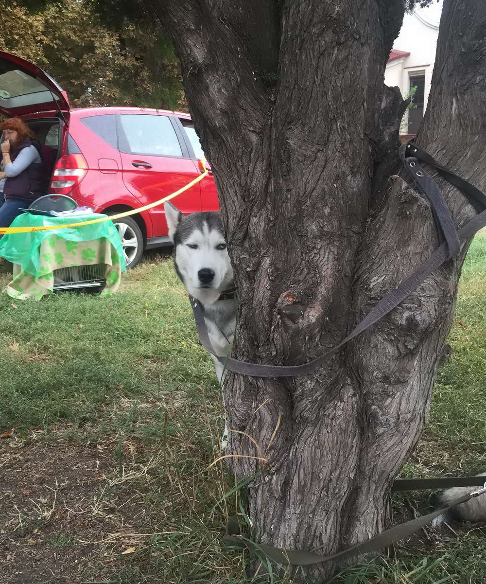 Funny Epic Fails Can Happen To Everyone (43 Photos)