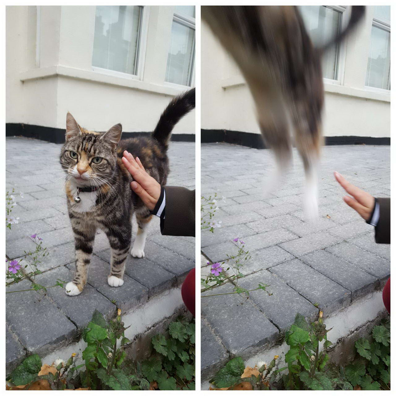 Funny Pictures Taken At The Right Time (42 Photos)