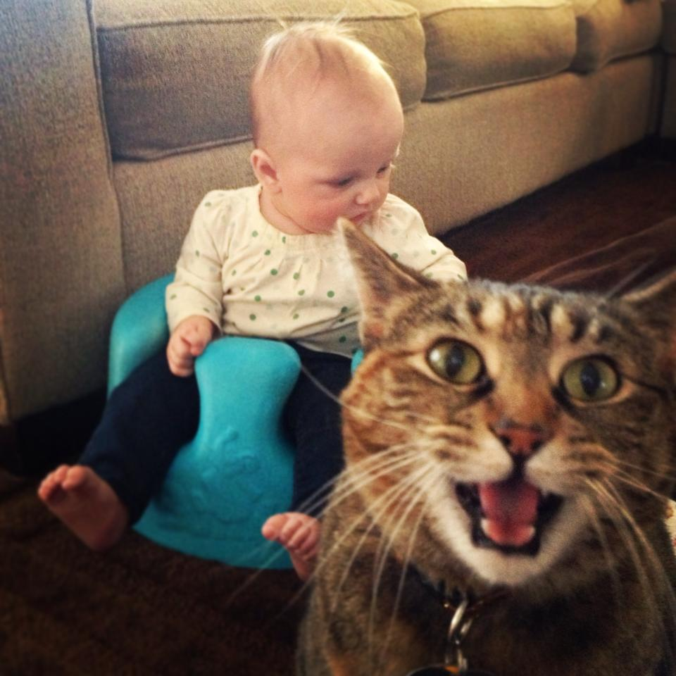 34 Cute And Funny Animal Pictures