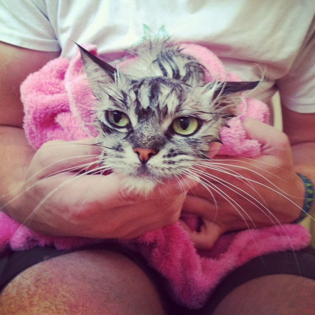 38 Cute And Funny Animal Pictures