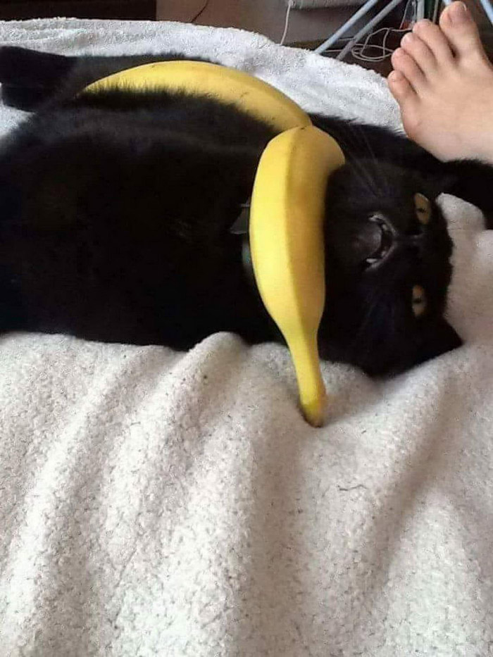 Funny Animals That Are So Cute (38 Photos)