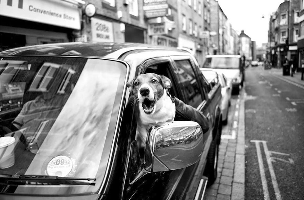Street Photographer Alan Schaller Travels The World Filming Different Dogs