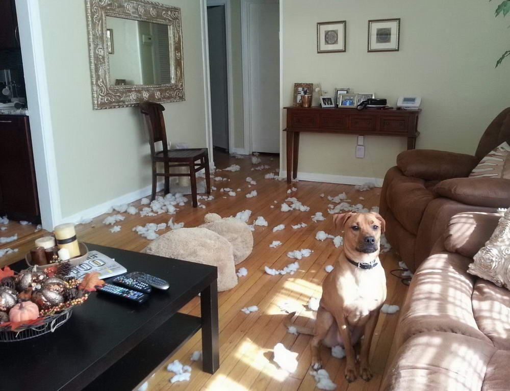 Funny Animals Pictures To Make Your Day (41 Photos)