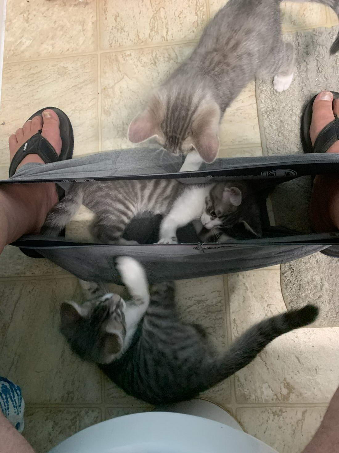 Funny Animals Pictures To Make Your Day (40 Photos)