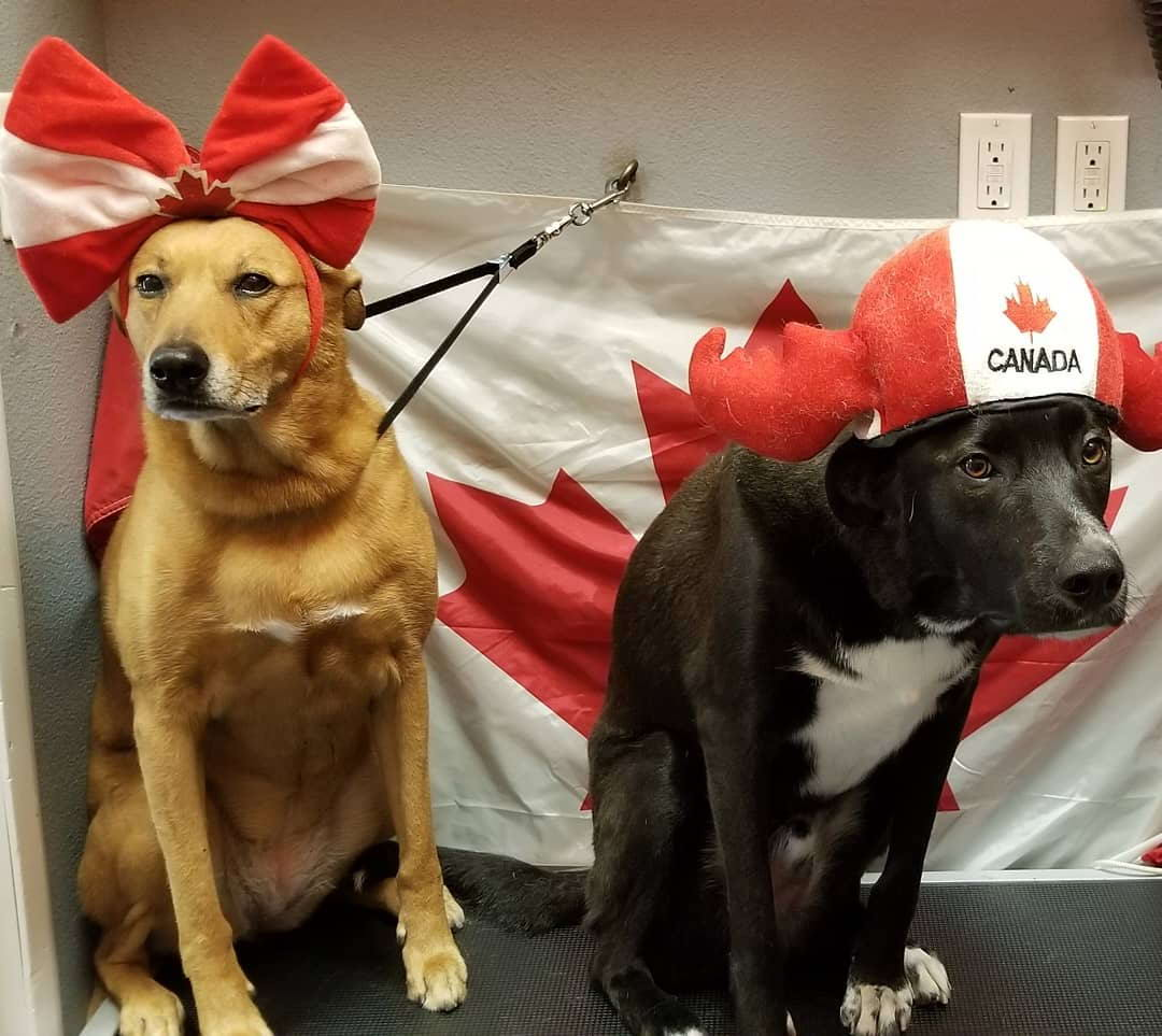 Funny And Awesome Pictures From Canada (45 Photos)