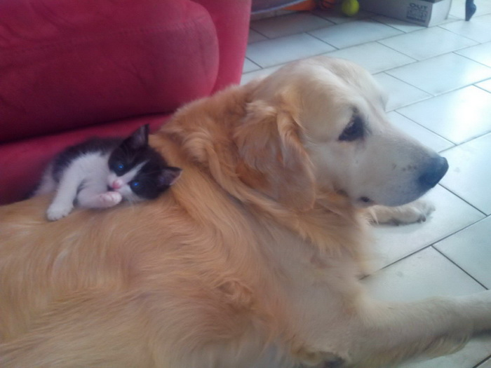 Funny Animals Pictures To Make Your Day (36 Photos)