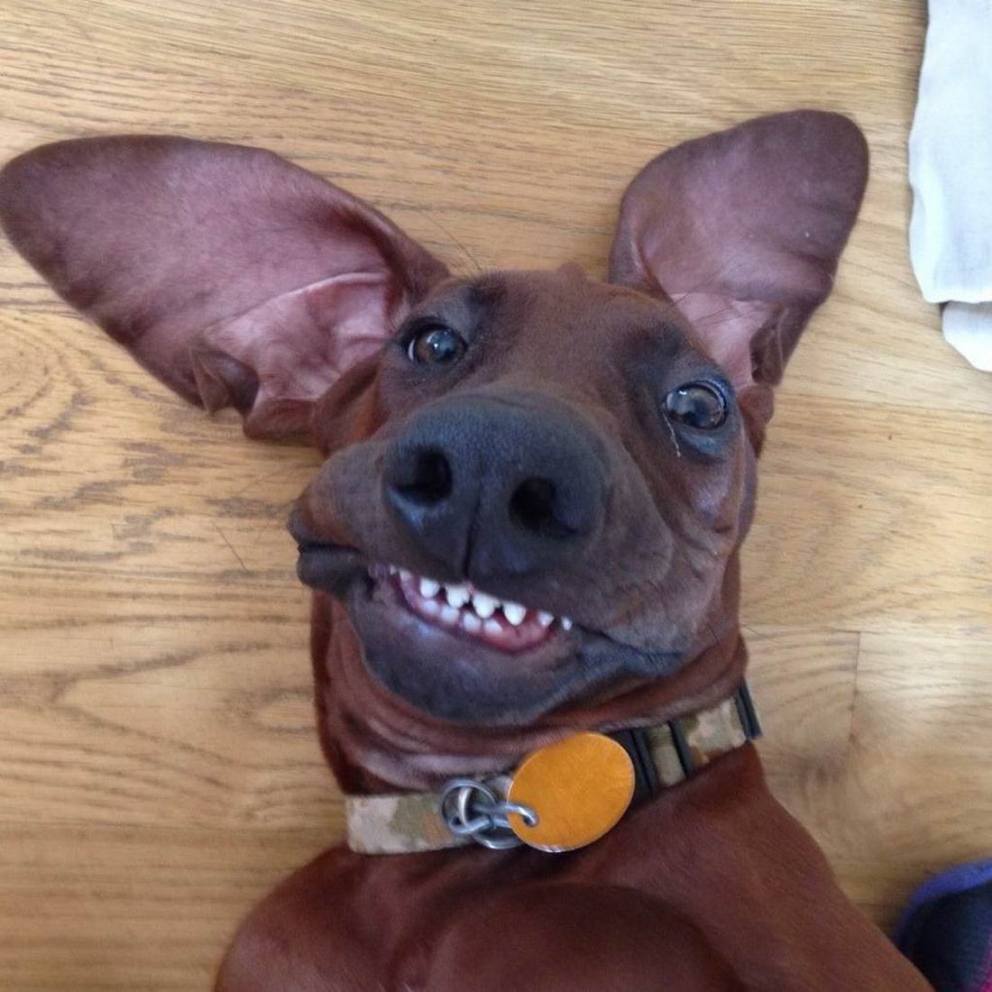 Funny Animals Pictures To Make Your Day (38 Photos)